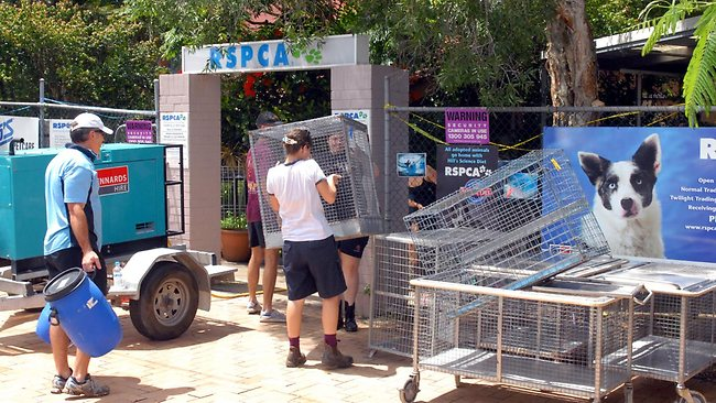 Volunteers at the Fairfield RSPCA in Brisbane city unloading cages in preparation for the December/January 'Fight Season'