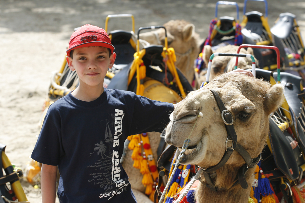 Camel trains will be running from the CBD to the race course for free all night. PHOTO: Errol Parker/AAP