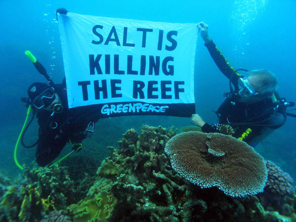 "A LNP-sponsored newspaper ad that clearly shows that Greenpeace is ""out of touch"" with ocean enthusiasts SOURCE: LNP Brisbane"