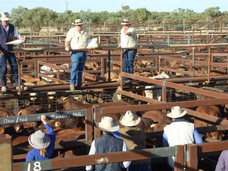 "Cattle sales are exclusive ""Christian"" hangouts were outsiders and women aren't welcome. PHOTO: QLD Police"