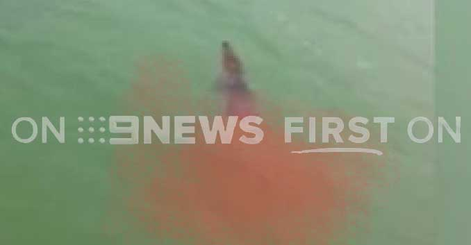 "BREAKING: NT Police on the hunt for ""croc killer"" shark"