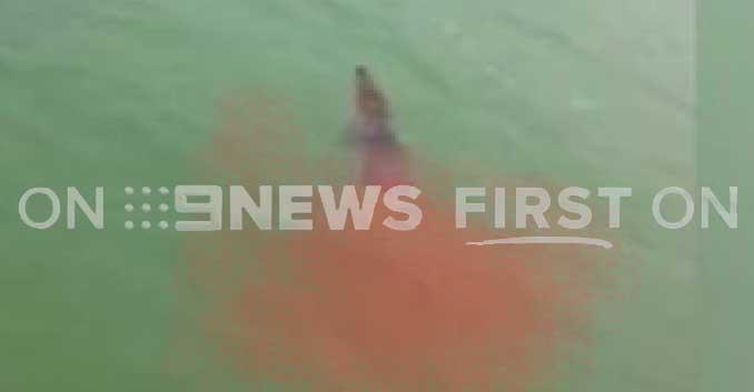 """BREAKING: NT Police on the hunt for """"croc killer"""" shark"""