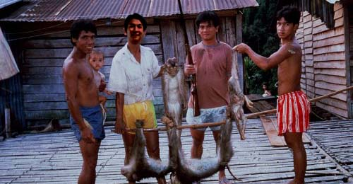 Even monkeys aren't off Mr Gui's hit list. PHOTO: Lone;y Planet Cambodia