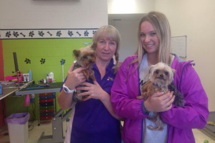 PHOTO: The social media post that revealed that wherabouts of Johnny Depp's unlisted Yorkshire terriers, Boo and Pistol at Happy Dogz groomers on the Gold Coast. (Supplied: Happy Dogz)