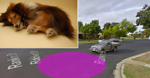 Fake Pet Scam, Bathurst Police Warn Motorists To Not Stop If They Hear A Noise