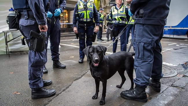 Border Force Admits They Planned On Using Sniffer Dogs In CBD Visa Blitz