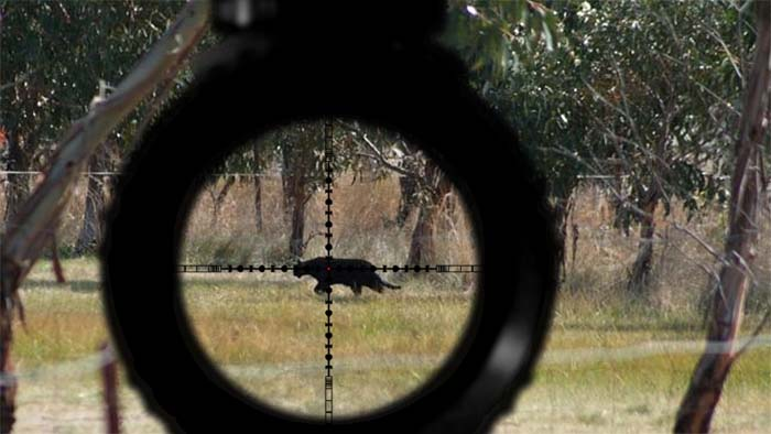 'Panther' shot in the Blue Mountains National Park puts politician in the crosshairs