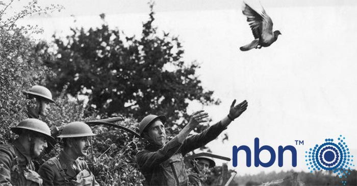 National Carrier Pigeon Network Launched To Compete With Fledgling NBN Service