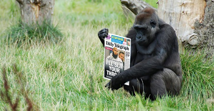 Scientists successfully teach gorilla to read at a Daily Telegraph-level