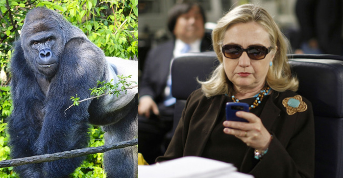 FBI Re-Opens Investigation Into Who Really Killed Harambe