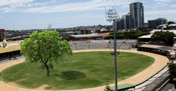 QLD Royal Show Pays Tribute To Land-Clearing Laws With Inconvenient Gum Tree In Main Arena