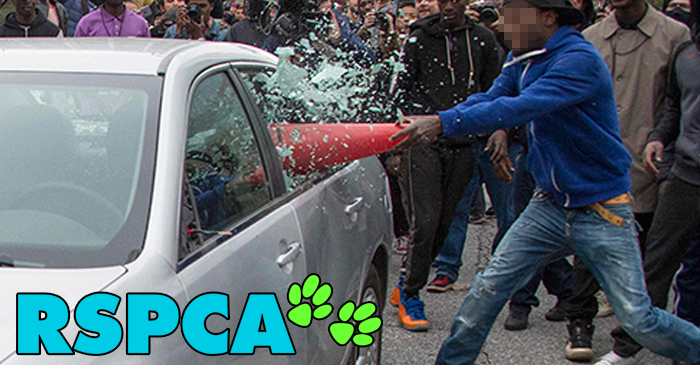 Apex Gang Members Released From Jail To Assist RSPCA In Saving Pets Locked In Hot Cars