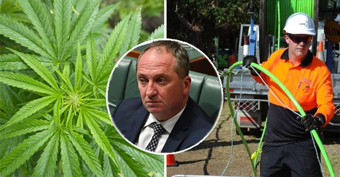 Could Legalising Cannabis And Taxing It Fix The NBN? Barnaby Joyce Says 'Whatever'