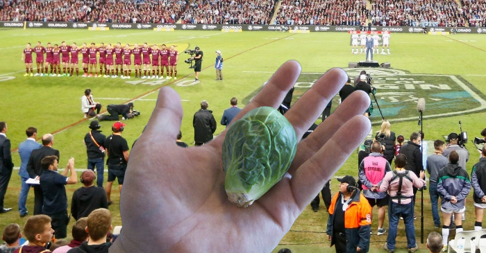 Suncorp Stadium To Serve Brussels Sprouts At Origin