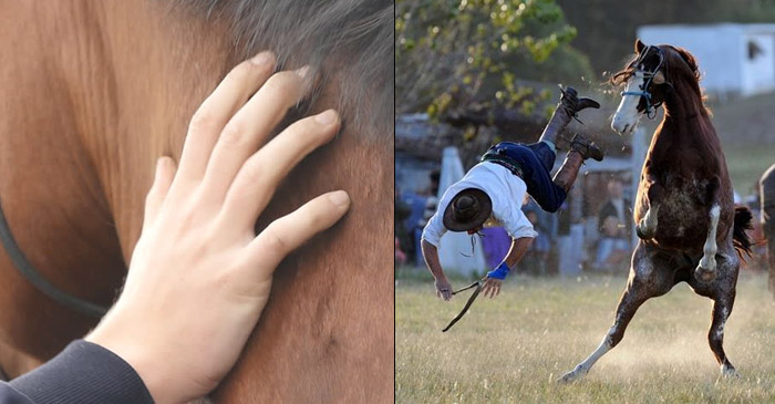 Study Finds Fresh Plant Horses Should Be Right After A Few Neck Rubs